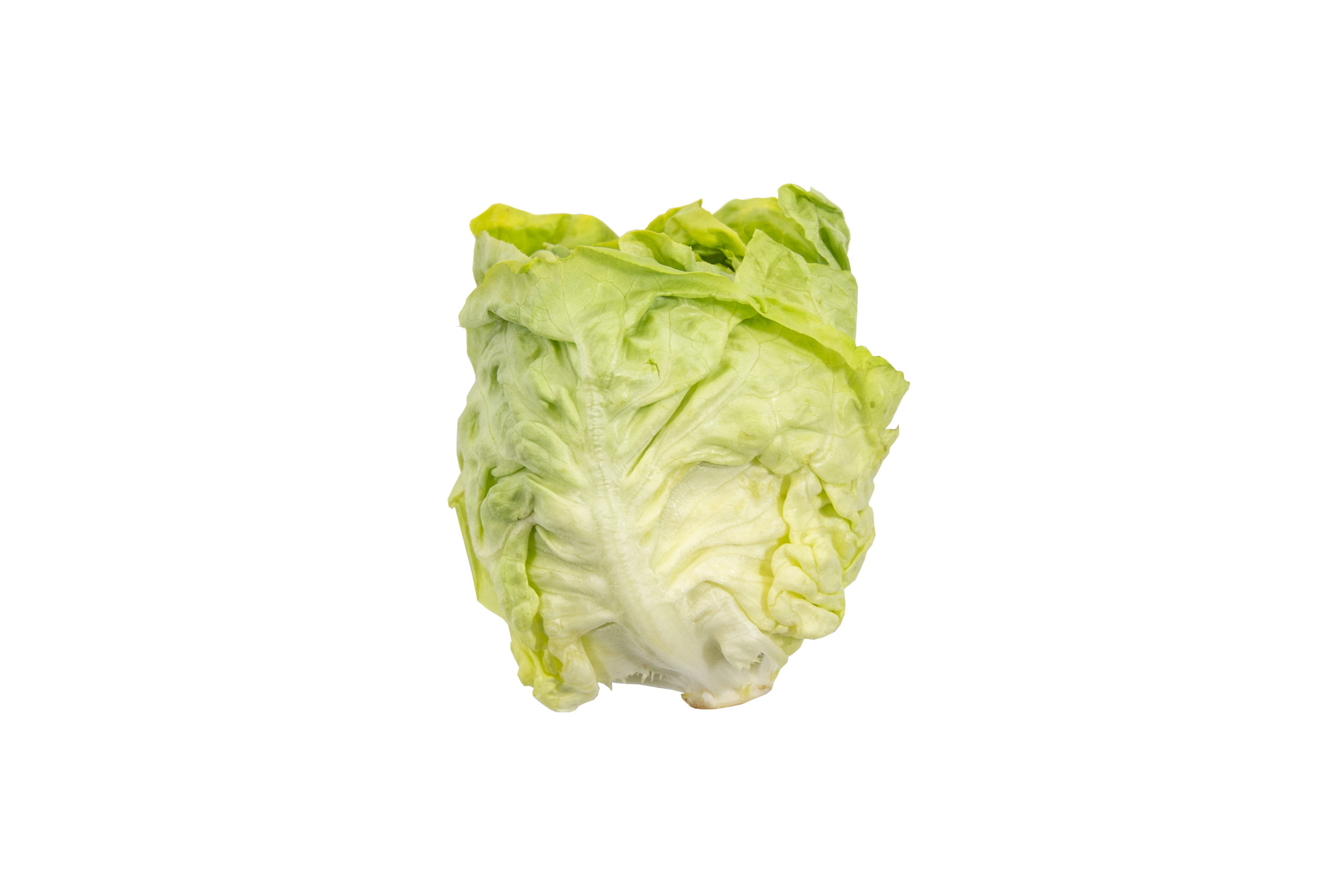 butterlettuce-single
