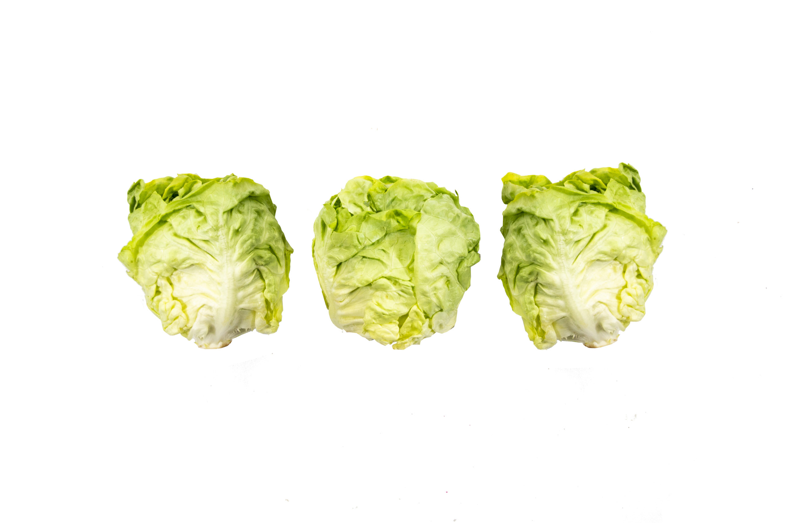 butterlettuce-threes
